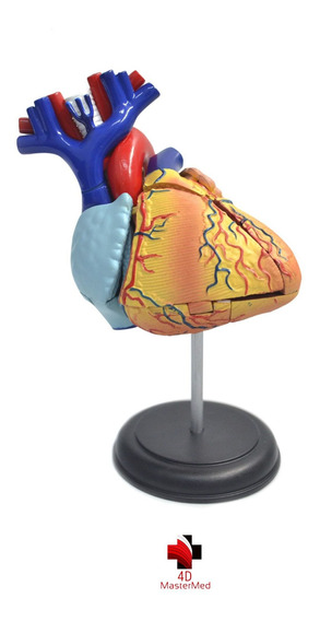 Modelo Do Corpo Humano - Coração - 4d Master