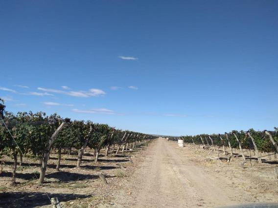 Finca 200 Has Ugarteche, Mendoza