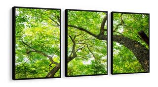Quadros Decorativos Árvore Copa Galhos Folhas Verdes Sala