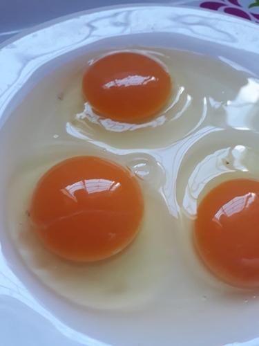 Imagen 1 de 9 de Huevos Caseros Busco Rebendedor