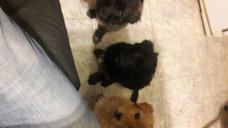 Regalo Cachorros De 3 Meses Hermosos
