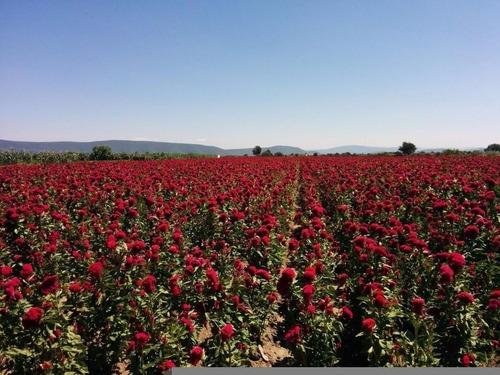 Terreno En Tenextepec Atlixco.oportunidad Excelente Para Cultivo