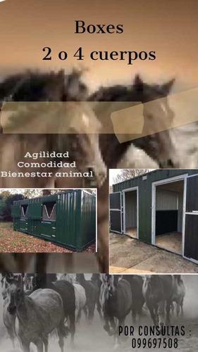 Container Boxes Para Caballos De AltaCalidad
