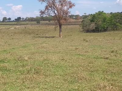 Fazenda A Venda Em Miranda - Ms (pecuária) - 939