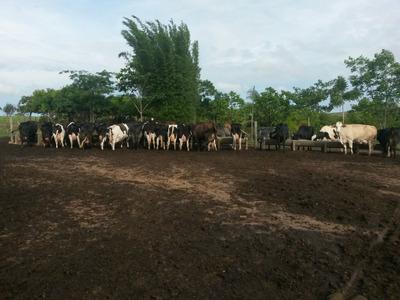 Fazenda Em Centro, Ipameri/go De 4694800m² À Venda Por R$ 10.000.000,00 - Fa116866