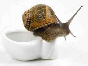 Apostila Aprenda Tudo Sobre A Criação De Caracóis Escargot
