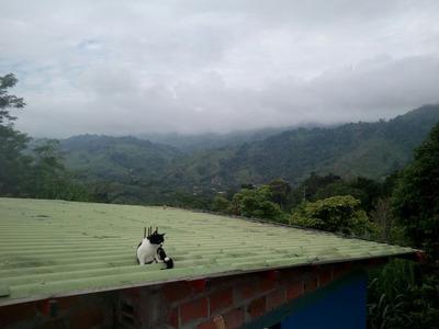 Vendo Finca Entre Alcala Y Cartago Valle