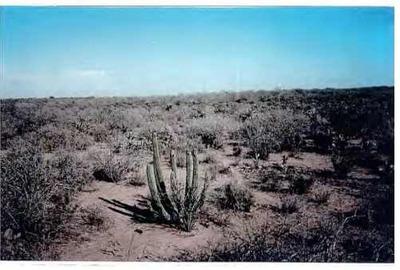 Se Vende Terreno Rustico Cd Obregon
