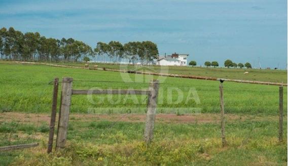 Fazenda - Acs 472 - Ref: 200146 - V-200258