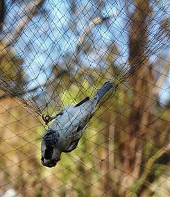 Rede Neblina Pega Pássaro Morcegos 15x3 Mts 15x15mm