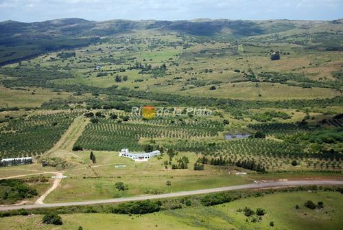 Campo Apto Fraccionamiento Con Plantación De Olivos Y Fábrica De Aceite De Oliva Muy Acreditado- Ref: 12801