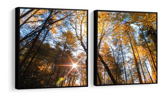 Quadro Decorativo Floresta Árvores Raios De Sol Sala Peças