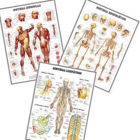 03 Mapas 60cmx80cm Anatomia Esqueleto + Músculos + Linfático