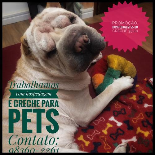 Hospedagem E Creche Para Pets