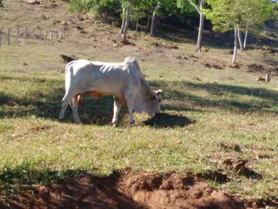 Fazenda Para Venda Em Caldas Novas - 103