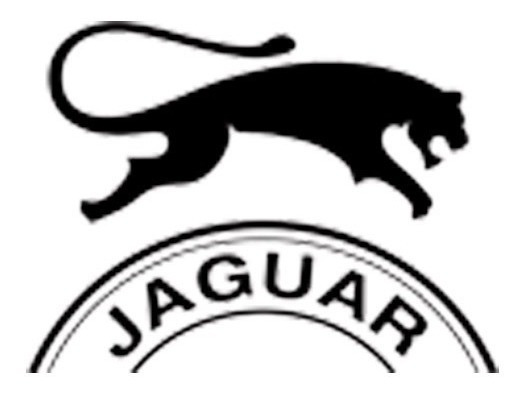 Zapatilla Urbana Tiempo Libre Jaguar 9038