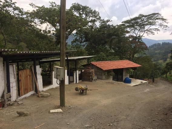 Finca Municipio De Heliconia 28.5 Cuadras