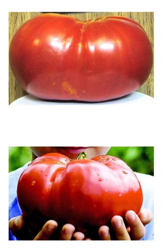 Imagem 1 de 7 de Tomate Gigante Do Guinness Sementes Recorde Mundial: 3,2 Kg