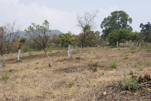 Terreno Campestre Totolapan, Morelos
