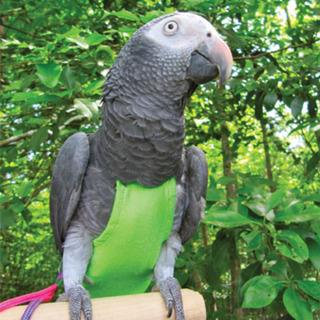 Pañal Pañales Reutilizables Aves Loros Cocotilla Talles