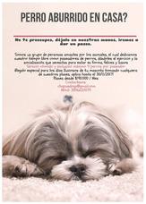 Paseadores De Perros En Chapinero Y Teusaquillo
