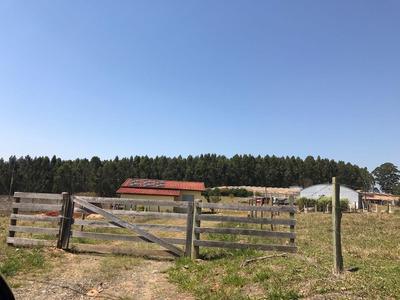 Chácara Rural À Venda, Lavinha, Pilar Do Sul. - Ch0269