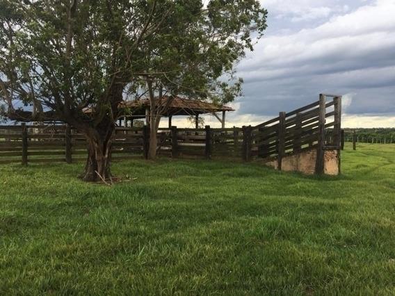 Fazenda A Venda Em Inocencia - Ms (pecuária) - 1166