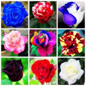Kit 300 Sementes De Rosas Raras E Exóticas P/mudas