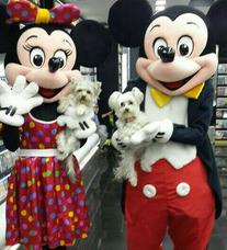 Alquiler De Munecotes De Mickey Y Minnie Show De Mickey