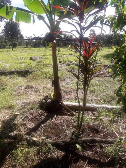 Vendo Terreno En Loreto Via A Huiruno