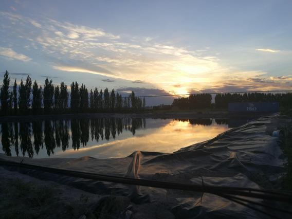 Finca Con Viñas Y Almendros Jaime Prats, San Rafael, Mendoza