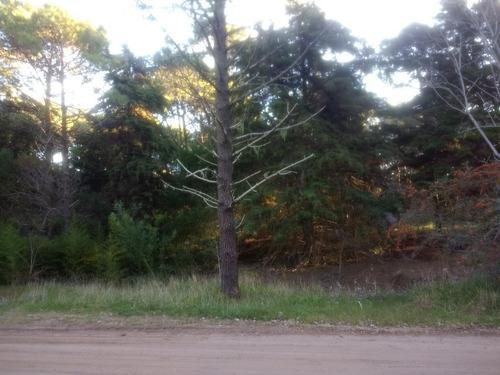 Imagen 1 de 6 de Gran Lote En Zona De Bosque, Hermoso Entorno!!!