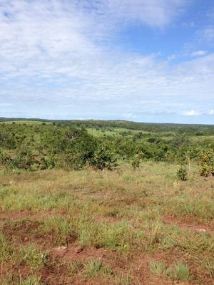 Fazenda Em Novo Acordo - To P/ Pecuária - 356