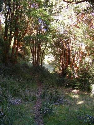 Terreno Construccion En Venta En Aisén