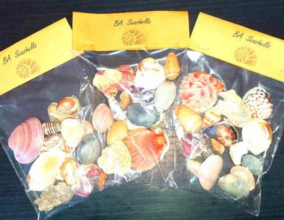 Conchas Marinas Caracoles En Bolsa. Surtidos. Variedad Color