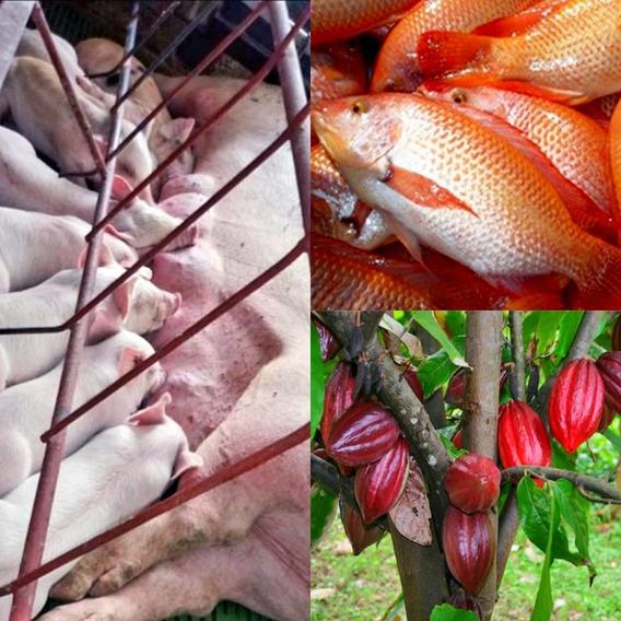 Finca De Cacoa, Cerco Y Tilapias En Yamasa De 67 Tareas