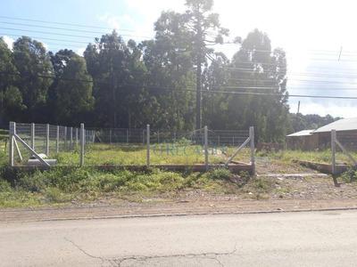 Terreno À Venda, 360 M² Por R$ 370.000 - Canelinha - Canela/rs - Te0519