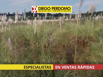Chacra De 31.950 M² En Venta, Montevideo