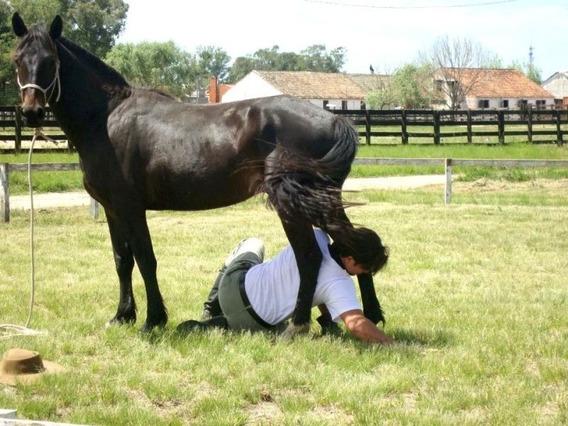 Curso Completo De Doma Racional -criação De Cavalos Promoção