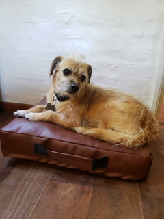 Colchón Impermeable Y Antidesgarro Para Perros