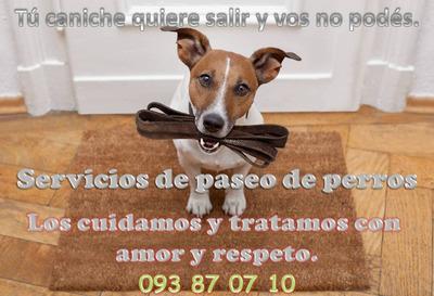 Paseo De Perros Y Cuidado De Gatitos.