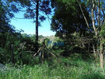 Chácara Rural À Venda, Pacotuba, Almirante Tamandaré. - Ch0129