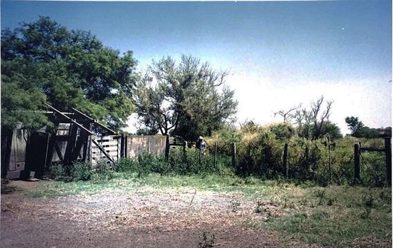 Campo Cría Norte Sta Fe Gato Colorado Algodón Girasol Sorgo