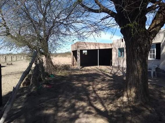 Campo Ganadero En Algarrobo Del Águila Lp.