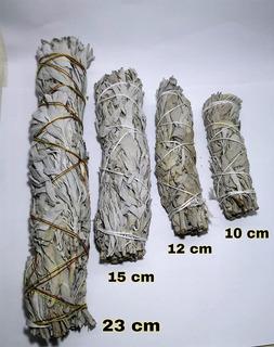 Salvia Blanca 12cm - 15 Atados