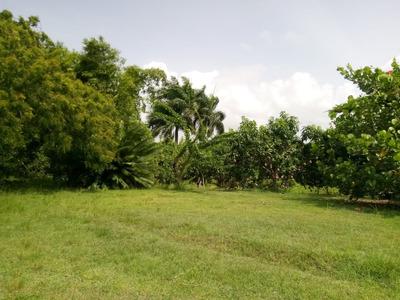 Te Vendo Finca De Mangos Orgánicos En Palenque,