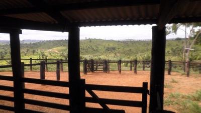 Fazenda A Venda Em Pacajá - Pa ( Pecuária ) - 480