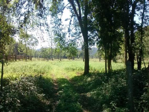 Rural - Venda - . - Miracatu - Ldna289