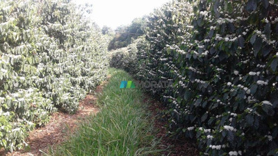 Fazenda De Café 350 Ha Pratinha (mg) - Cod: Mta663