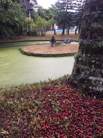 Sitio Caicara Pirai Rj Brasil - 289